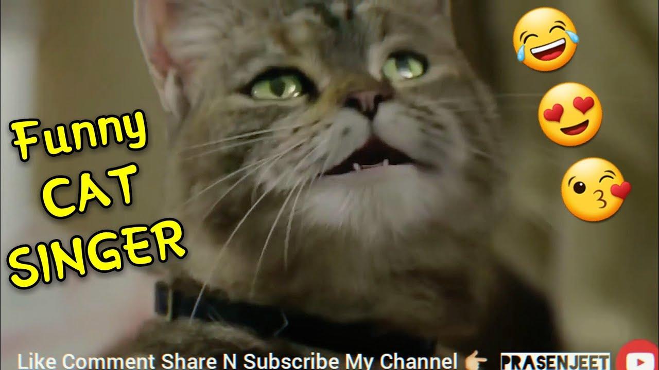 Amazing Funny Cat Singing Song Whatsapp Status Video By Prasenjeet Meshram