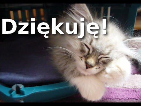 Znalezione obrazy dla zapytania dziękuję kotek