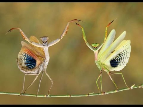 Resultado de imagen para Las mejores fotografías del año, según,National Geographic