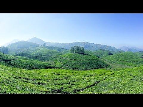 Munnar tea garden drive - thekkadi to munnar route   Kerala tourism