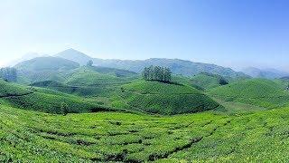 Munnar tea garden drive - thekkadi to munnar route | Kerala tourism