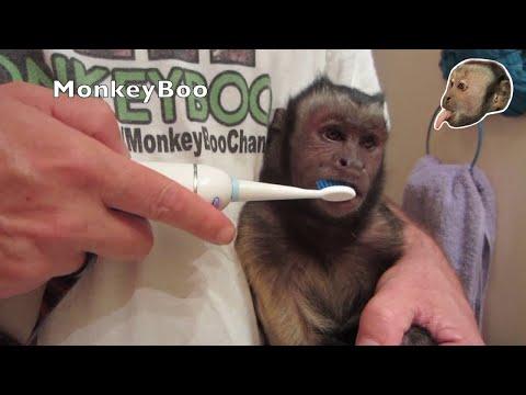 Monkey Smile So White!