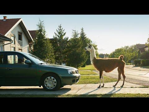 Llama Drama - Bosch High Performance Wiper Blades