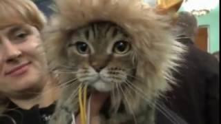 Восхитительно   красивые мордочки кошек и котов