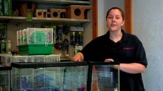 Pet Rodents : H๐w to Pick a Healthy Hamster