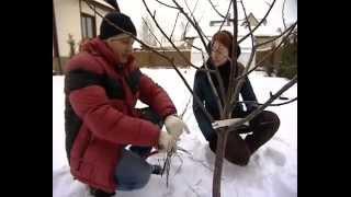 Весенняя обрезка деревьев(, 2012-12-28T15:44:44.000Z)
