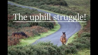 Tripod trouble and Exmoor Ponies