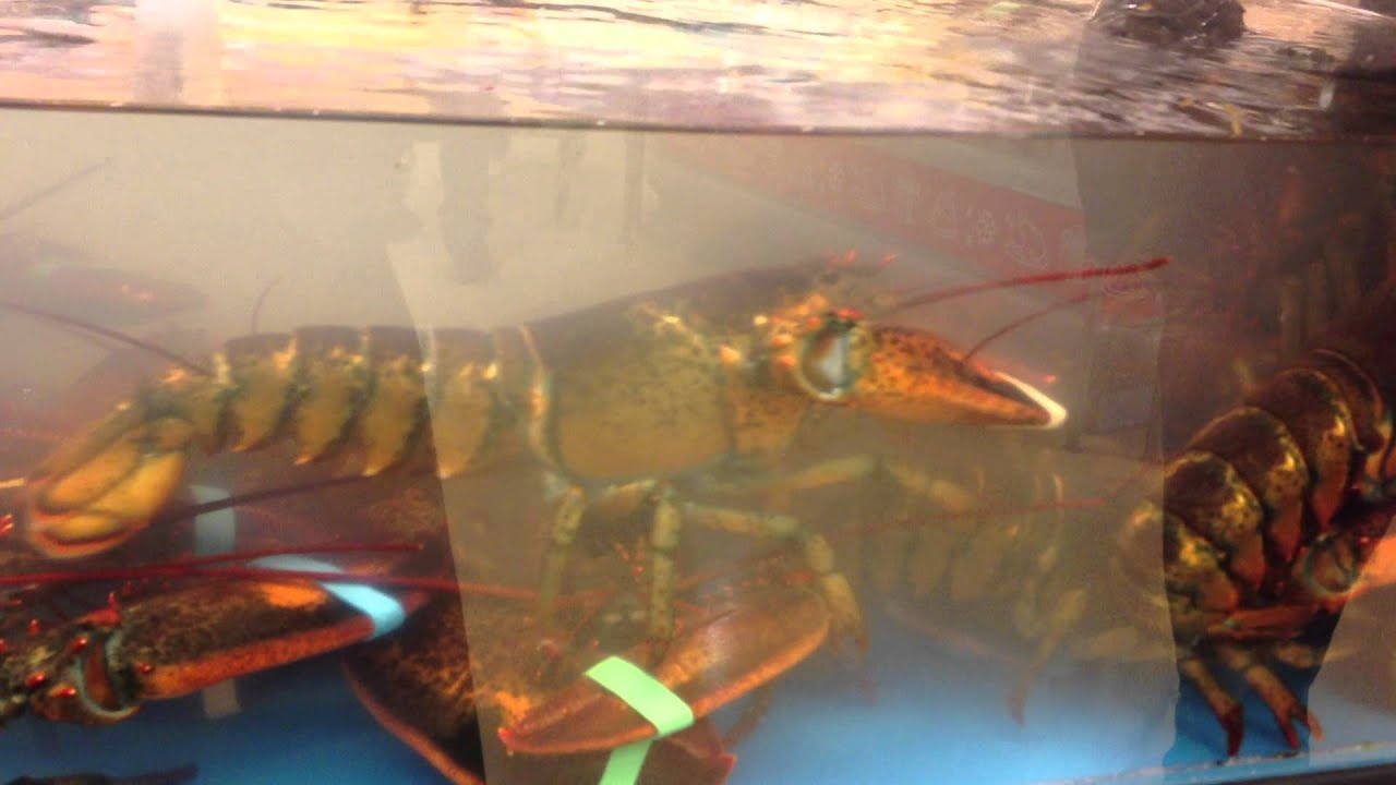 Lobster Tank at the SuperStore