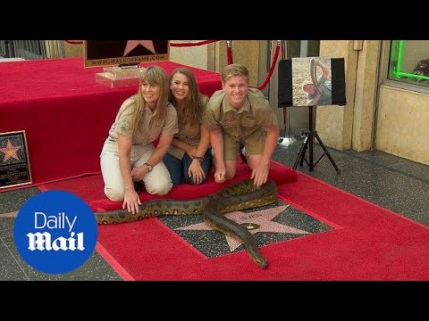 The late Steve Irwin receives star on Hollywood Walk of Fame - Daily Mail