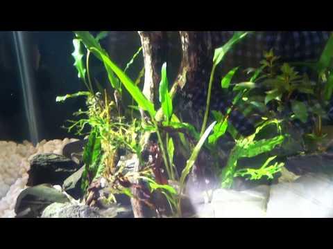 aquascape / aquarium scape / aquarium scape aceh indonesia 2