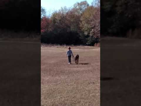 Marshall on leash with five year old handler