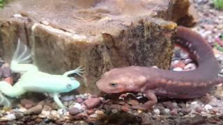 Frog & Salamander  Tank
