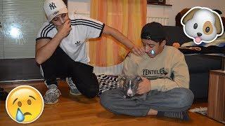 Hund Muss Weg Prank an Kleinen Bruder Eskaliert | HasnisWorld