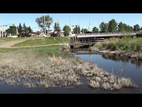 Microsoft/Evergreen, Nose Creek Planting 2013, Airdrie, Alberta