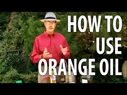 How To Use Orange Oil - The Dirt Doctor
