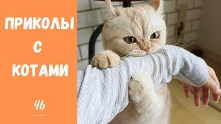 Смешные КОТЫ КОТИКИ КОТЯТА Приколы с животными 46