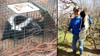 Skunk Trapping Handling 101