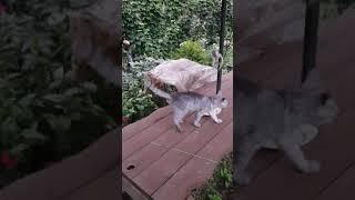 고양이 훈련