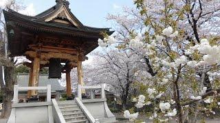 妙見社と妙見寺・・風鐸(ふうたく)の音と桜吹雪に、うっとりする56歳無職・・高崎/群馬