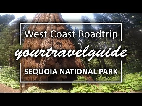 Sequoia National Park Travel Guide | 4K Ultra HD