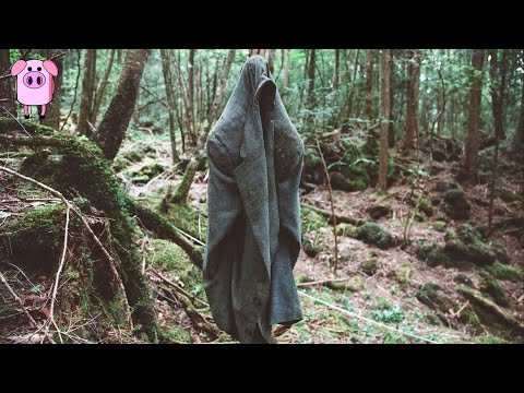 5 Most Haunted Forests in the World