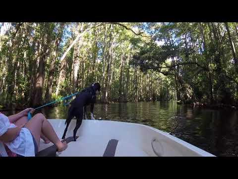 Ride Down The Dora Canal - Mt Dora Tavares Eustis Florida