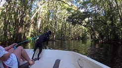 Ride Down The Dora Canal - Mt Dora Tavares Eustis Florida
