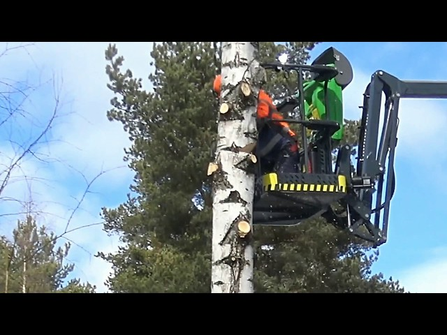 Leguan Lifts in action: Arborist felling a tree with L190