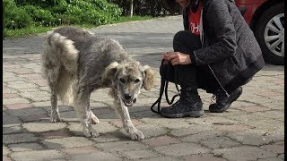 Homeless Dog Runs Toward Us Trying To Ask For Help