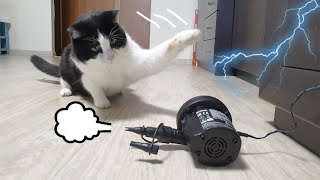 Survival Skills. Cat VS Air Pump