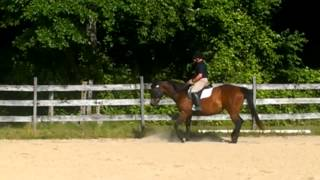 """TB mare recovered from abuse by """"dressage"""" Nazi"""
