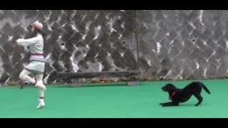ドッグダンス の練習 ① Freestyle Dancing Dog Lily Jazz in Paris 久し...