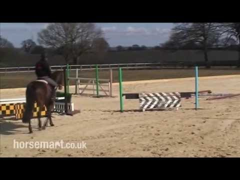 How to train your horse to be supple and stretch over the back using serpentines