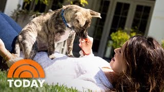 Katherine Schwarzenegger Talks About Animal Rescue And Her New Book | TODAY