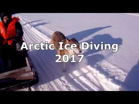 Arctic Ice Diving 2017
