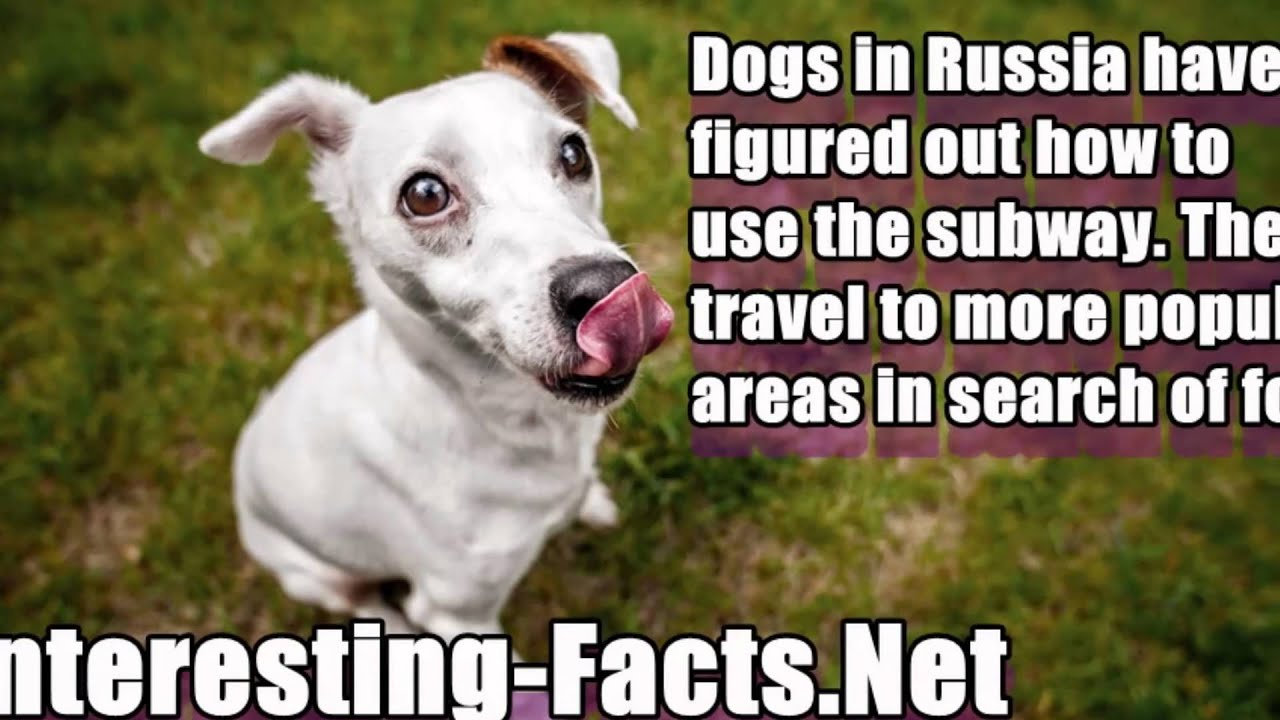 bet you didn 39 t know dog facts youtube
