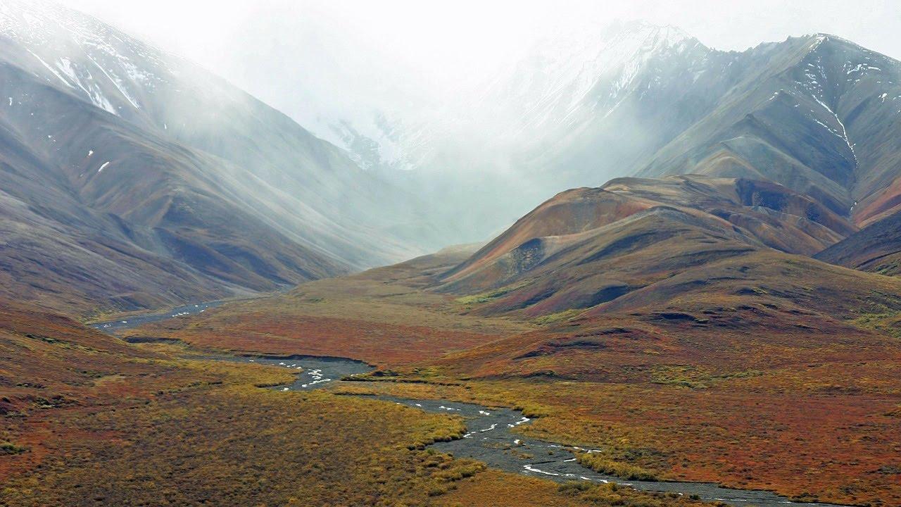 Tundra - Información y Características - Biología