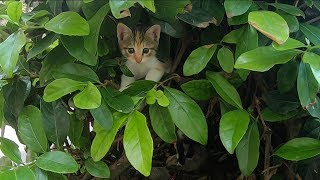 Kittens live under the plants