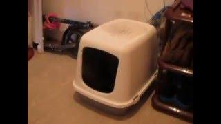 Кошка Масяня ходит в свой бункер-туалет.