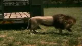 kevin Richardson documental completo (español)