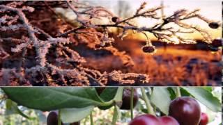 """Видео проект- 3.  Владимир Дашкевич, музыка (из кинофильма """"Зимняя Вишня"""")"""