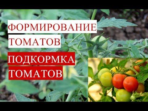 видео: Формирование Томатов. Подкормка Томатов.