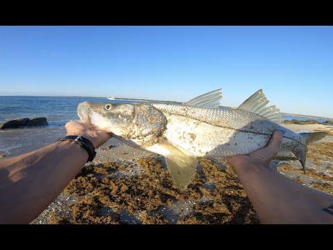 Insane Action - Snook Fishing The Beach In Stuart, Florida