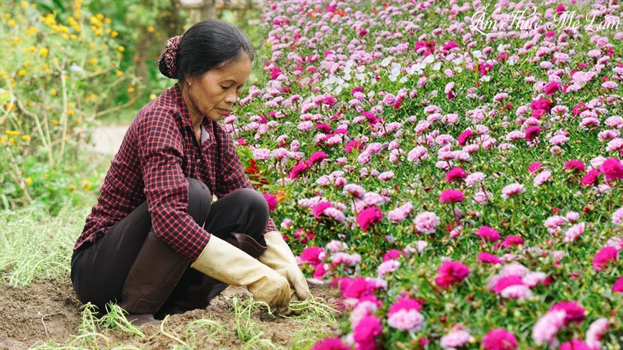 Mẹ trồng vườn hoa mười giờ tuyệt đẹp đủ sắc màu, cách trồng rất đơn giản I Ẩm Thực Mẹ Làm