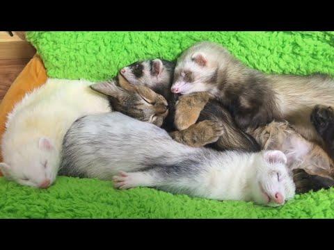 Прикольные картинки, видео и фото животных