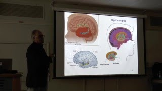 Dr Giuseppe Zappala - The California Verbal Learning Test and the frontal lobes