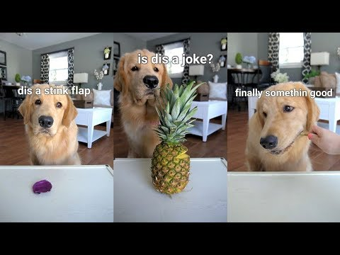 ASMR Dog Reviewing Different Types of Food - Tucker Taste Test #6