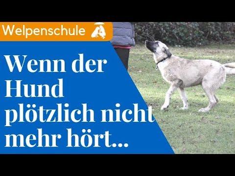 Hundepubertät / Mia hört nicht mehr! /  Mia and Me DogTV