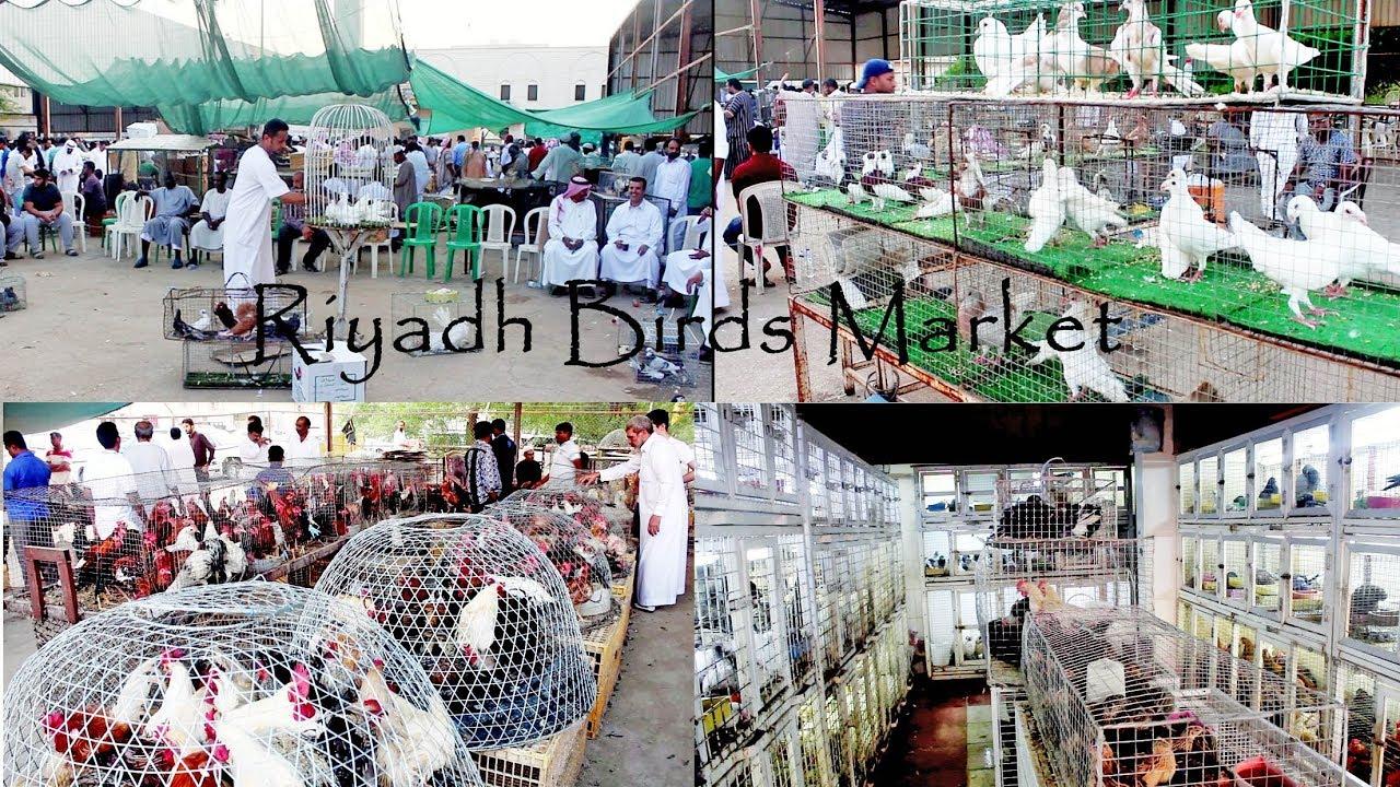 Bird's Market, Riyadh Saudi Arabia