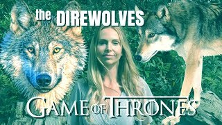 The REAL LIFE DIREWOLVES of GAME OF THRONES?